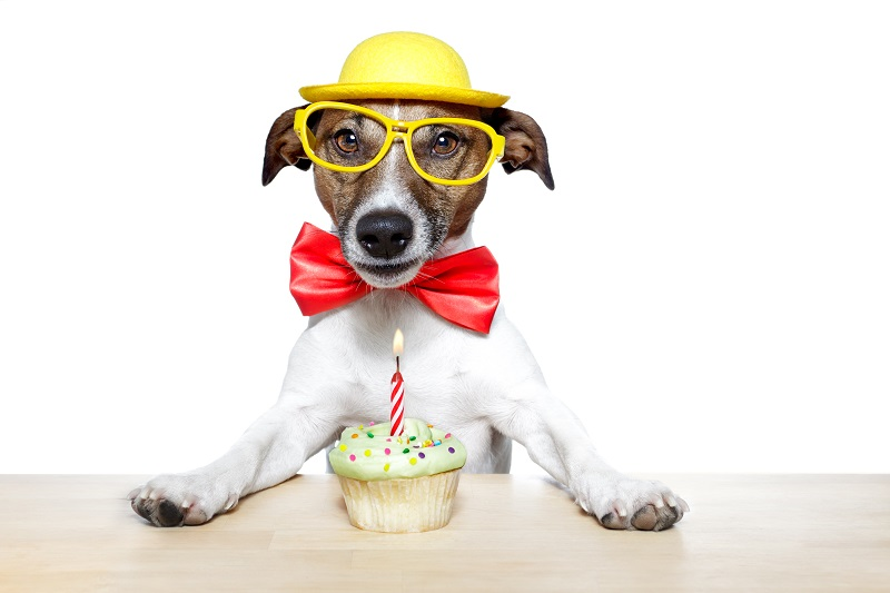 Birthday ecards at Hope Spring ecards – dog with birthday cake a big favourite
